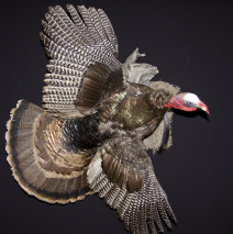 Flying Turkey
